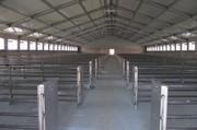 Ангары для животноводства,  строительство под ключ в Украине.